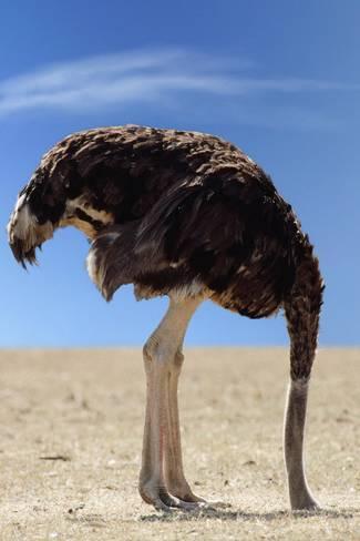 Ostrichwithheadinsand.jpg
