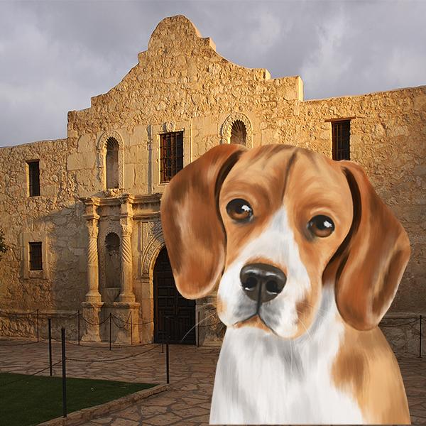 Beagle-Alamo.jpg