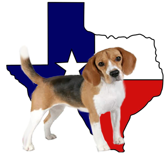 Texas-Shape-Beagle-FullBody.jpg